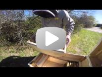 Flytning af bier til et trugstade Del 2 af 2