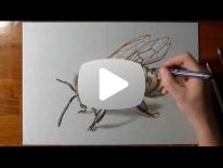 Hvordan jeg tegner en Bi