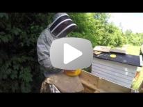 Fodring med api invert i trugstade