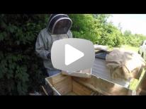 Varroabehandling med kræmerplade