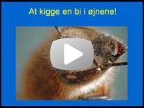 Biens øjne 1