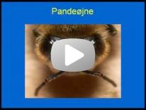 Biens øjne 3