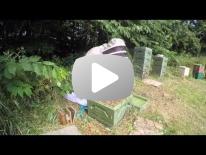 Varroabehandling med oxalsyre